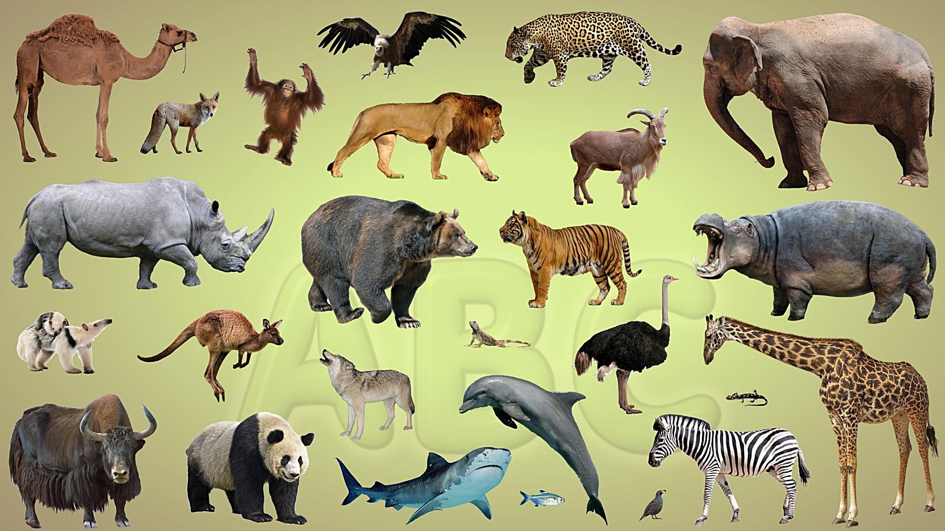 """Broască – broscoi, lup – lupoaică, girafă – """"giră..foi?""""?! –  Substantivele epicene"""