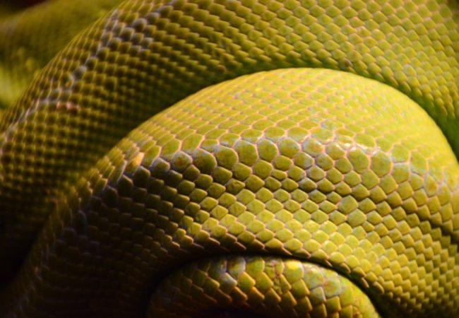"Expresii și locuțiuni cu termenul ""șarpe"" + quiz"